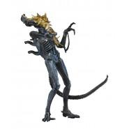 ALIENS Action Figure XENOMORPH WARRIOR Battle Damaged 18cm BLUE Collection Original Official NECA