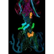 Monster High Great Scarrier Reef Doll Figure 27cm GLOWS IN THE DARK Mattel DHB48